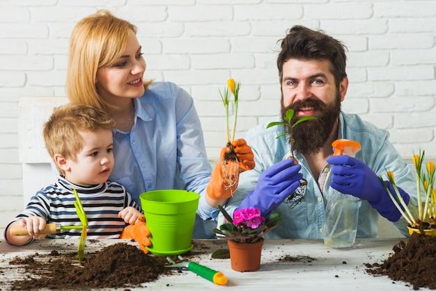 Primavera. fiori di piante di famiglia. il figlio aiuta i genitori a piantare fiori.