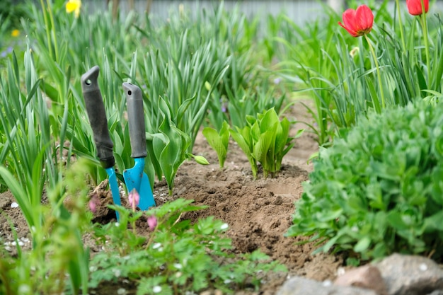 Primavera, giardinaggio stagione primaverile, attrezzi da giardino del suolo e giovani piante verdi.