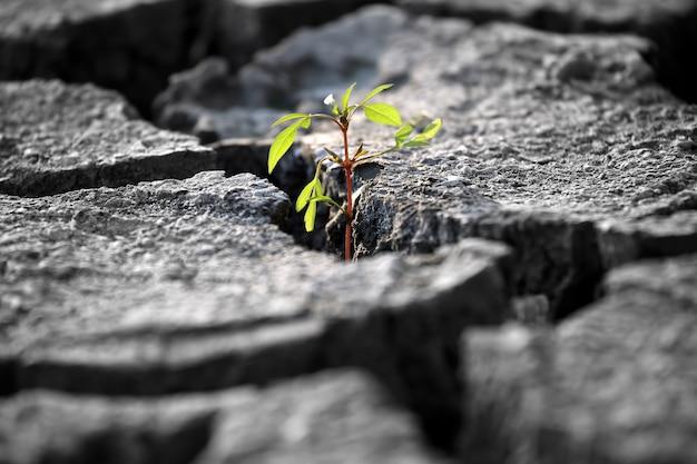 Spuntano piante che crescono su terra screpolata molto secca