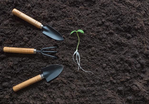 Germoglio con radici e attrezzi da giardino disposti su uno sfondo di terreno.