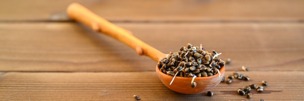 Semi di canapa germogliati cibo in un cucchiaio di legno su uno sfondo di legno. banner