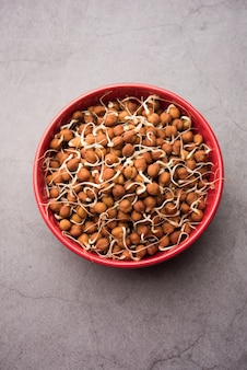 Kala chana germogliato o ceci neri o marroni - è un sostituto vegano per le proteine ricche e ha un alto contenuto di enzimi viventi