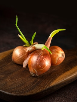 Cipolla germogliata su un tavolo di legno