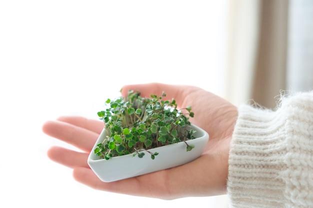 Microgreens di semi di ravanello germogliati. giorno della terra. germinazione dei semi nelle case