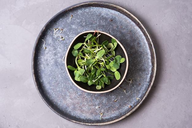 Microgreens germogliati del girasole in una ciotola su un fondo grigio, alimento vegetariano, concetto sano di nutrizione, primo piano