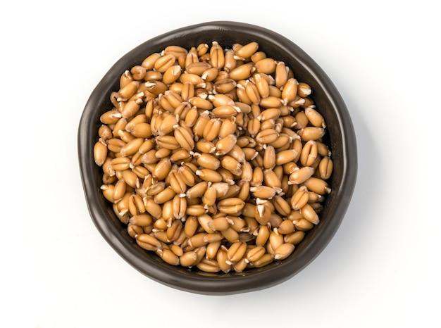 Germe di grano germogliato in una ciotola isolata su bianco
