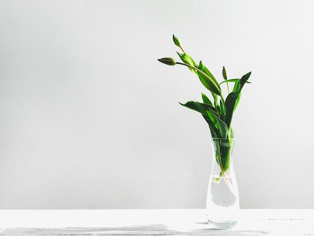 Germogli di giovani tulipani
