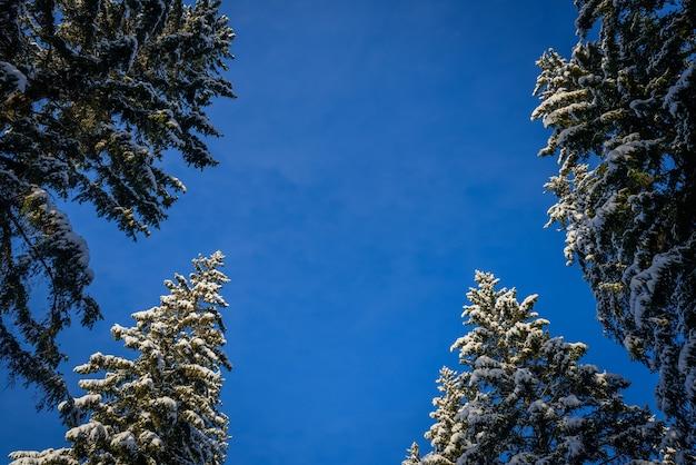 Rami di abete rosso sotto la neve bianca - un biglietto di auguri di capodanno con spazio di copia.