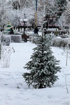 Abete nel parco invernale