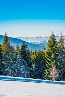 Foresta invernale di abete rosso con vista sulle montagne