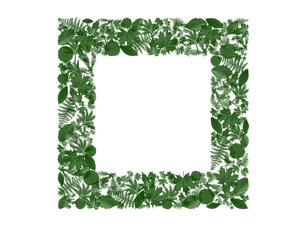 Cornice quadrata le foglie verdi intorno per aggiungere testo e parole pubblicitarie