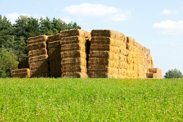 Pile quadrate di paglia impilate insieme in un mucchio, paesaggio estivo