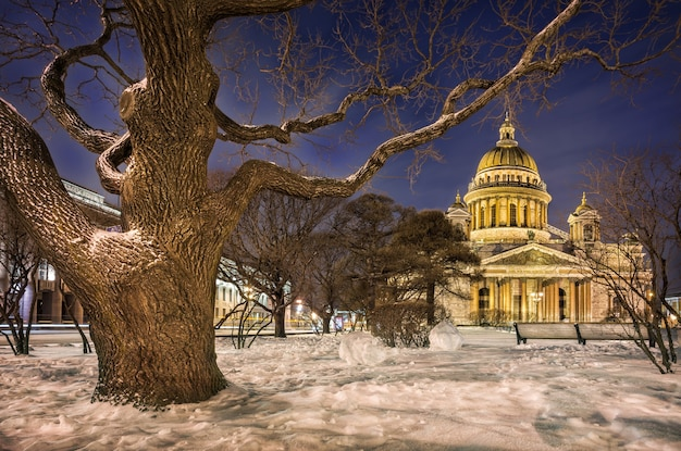 Cattedrale di sant'isacco tra le vecchie zampe nodose degli alberi in inverno san pietroburgo
