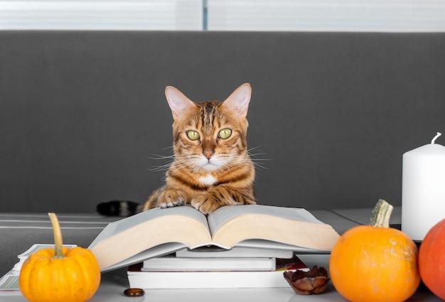 Una pila di libri, una candela, zucche arancioni e un gatto.