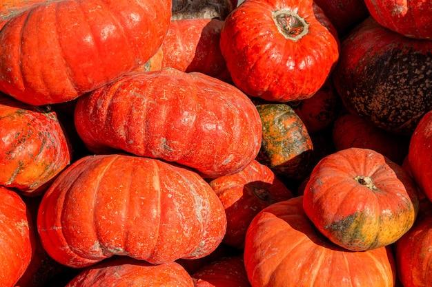 Pila, mucchio di zucche sul mercato agricolo dopo il raccolto. prodotto agricolo ecologico