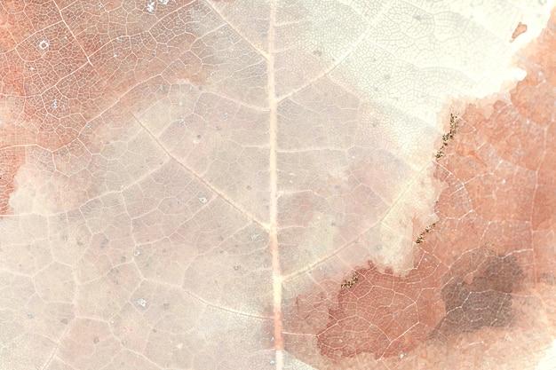 Fondo di macro di struttura della foglia dell'uva spina della stella