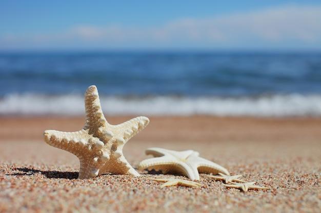 Stelle marine sulla spiaggia. spiaggia di sabbia con onde. concetto di vacanza estiva. vacanze al mare.
