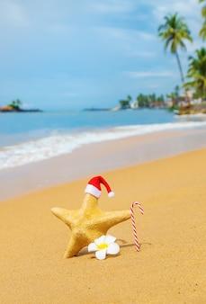 Starfish babbo natale sulla spiaggia. messa a fuoco selettiva. natura.