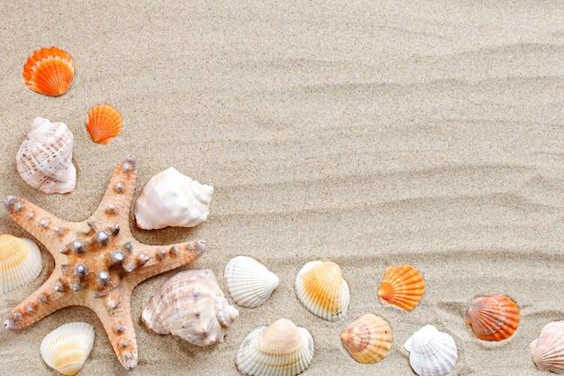 Stelle marine, conchiglie, pietre di mare e foglie di palma che si trovano sulla sabbia del mare
