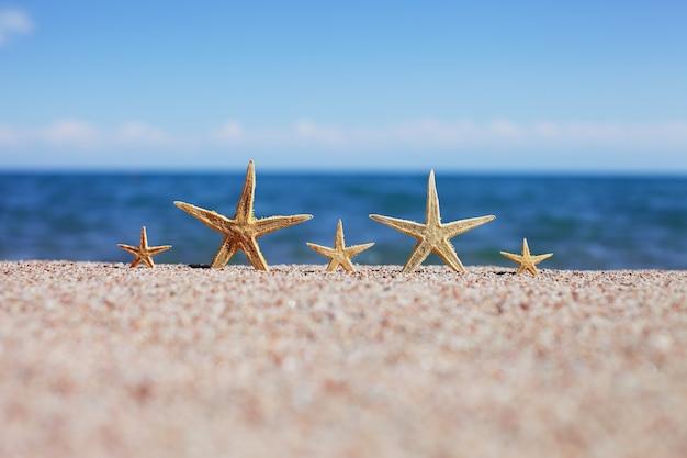 Stelle marine su una spiaggia sabbiosa durante le vacanze estive
