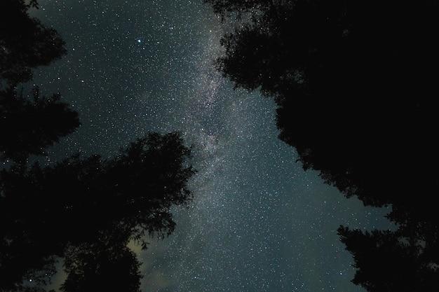 Cielo stellato e via lattea tra gli alberi