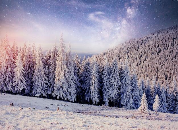 Cielo stellato nella notte nevosa di inverno. cielo stellato nevoso notte d'inverno.