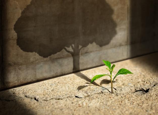Inizia, pensa in grande, recupero e sfida nella vita o nel concetto di affari. simbolo di crisi economica. nuova crescita di piante di germogli verdi in calcestruzzo incrinato e ombreggiatura di un grande albero ombra sul muro di cemento