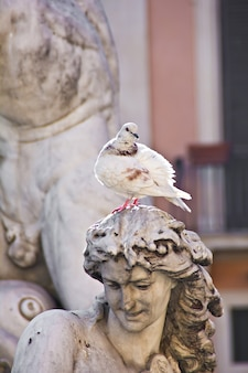 Statua fontana e colomba in piazza navona a roma (italia)