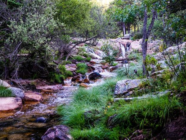 Vapore in una foresta in una giornata di sole. fiume nella foresta di montagna.