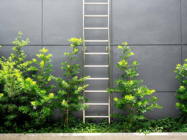 Scala in acciaio vicino alle foglie verdi sul muro grigio