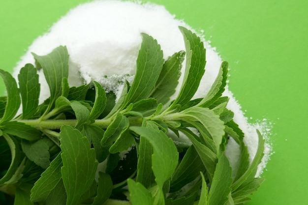 Stevia rebaudiana. rametti di erbe fresche di stevia e polvere bianca. dolcificante naturale in polvere dalla pianta di stevia