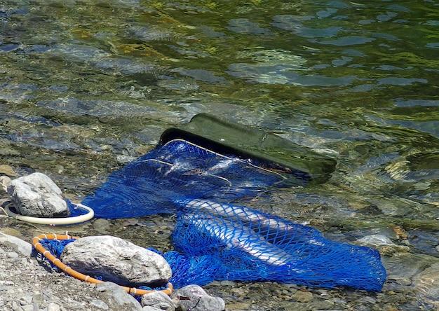 Pesce di vita di stil che nuota nella rete blu con il fiume fresco scorrente sulla stagione estiva. Foto Premium