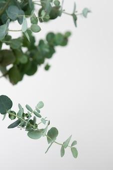 Assortimento di natura morta di piante d'appartamento verdi