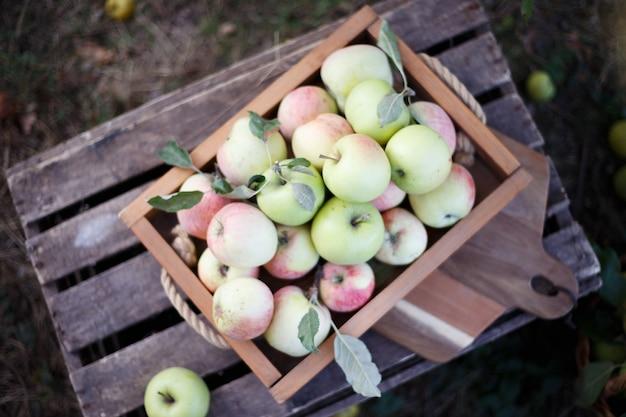 Natura morta - cesto con mele succose in giardino.