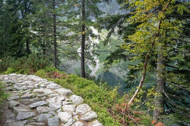 Il sentiero escursionistico in pietra naturale in norvegia ha scattato in verticale per enfatizzare la distanza e la sensazione di avanzamento. sparato durante la mattina sotto un baldacchino più forrest.