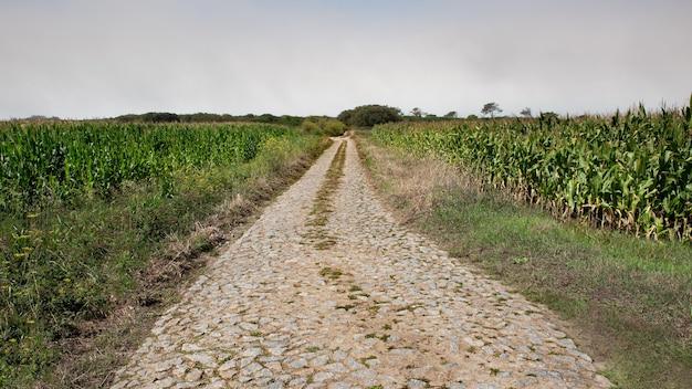 Strada lastricata in pietra nei campi di grano