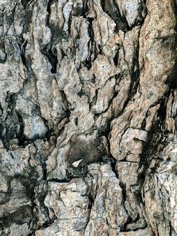 Struttura di pietra incrinata causata dalla natura