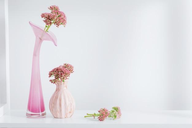 Stonecrop in vaso su spazio bianco
