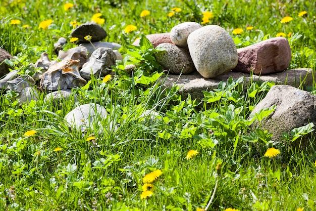 Pietre che giacciono sull'erba verde primaverile con denti di leone in fiore