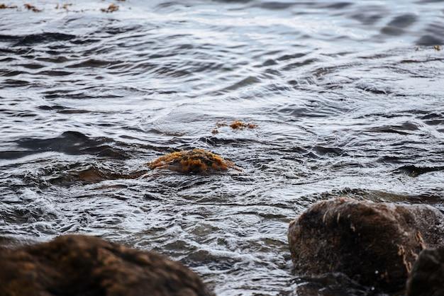 Pietre nell'acqua ricoperte di alghe e muschio sullo sfondo della natura del paesaggio marino