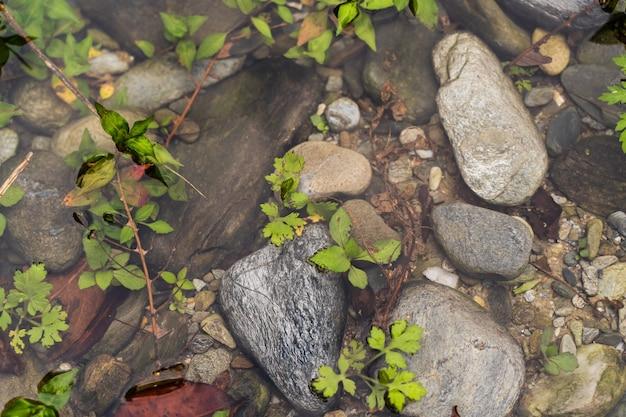 Pietre in acqua con piante verdi, sfondo astratto, foto d'archivio