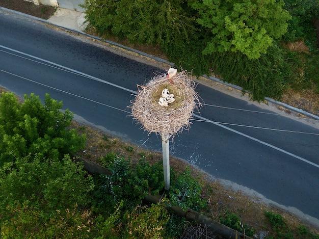 La cicogna che torna ai nidi nei mesi primaverili, il nido della cicogna, le due cicogne,