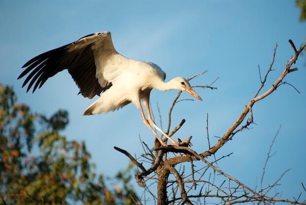 Una cicogna seduta su un albero con le ali spiegate.
