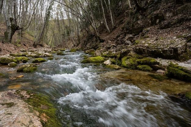 Fiume tempestoso nella foresta il fiume di montagna scorre tra i massi forte corrente