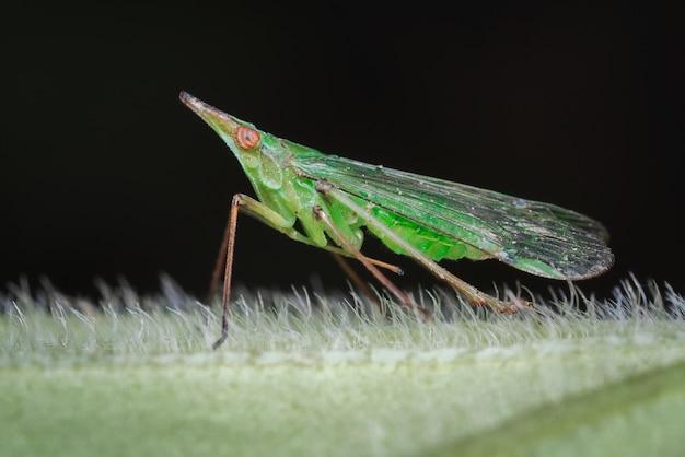 Strano insetto su una foglia pelosa