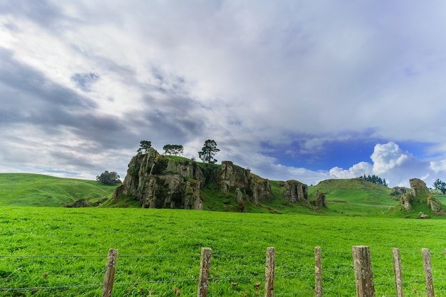 Strane formazioni rocciose nell'isola del nord della nuova zelanda