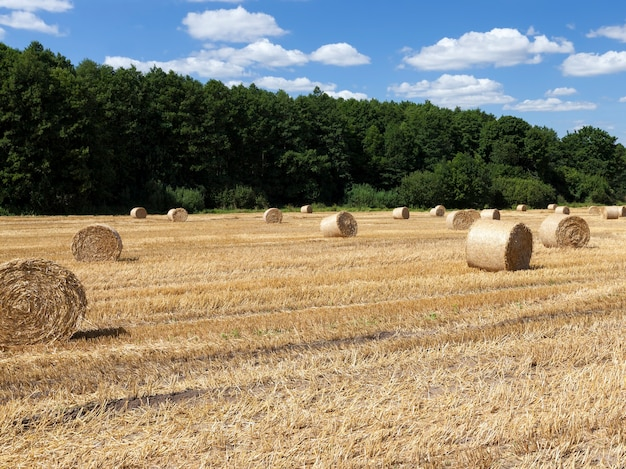 Paglia sul campo agricolo vicino alla foresta