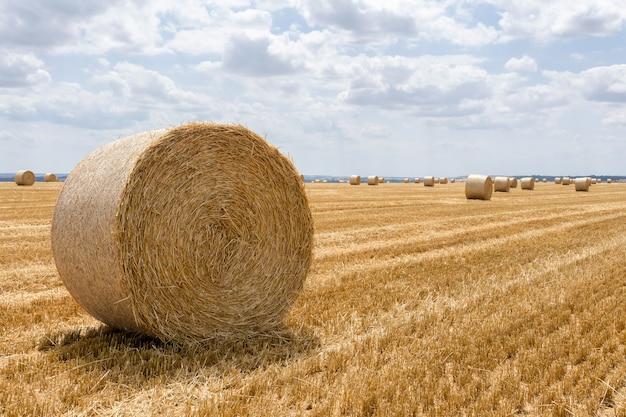 Balle di paglia impilate in un campo nel periodo estivo