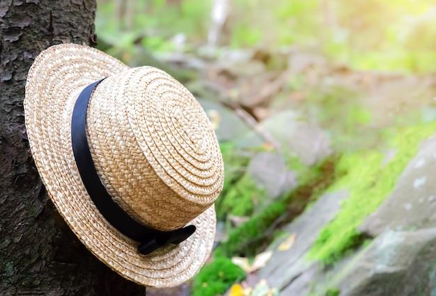 Cappello di paglia sull'albero nella foresta. concetto di voglia di viaggiare. turisti che fanno un'escursione in montagna. viaggiare nella natura.