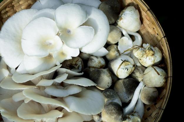 Funghi di paglia coltivati da paglia di riso in tailandia